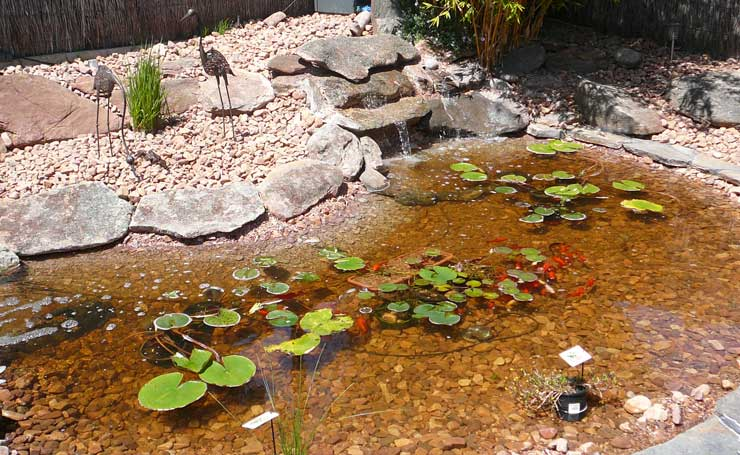 How to build a concrete garden fish pond with instructions for Building a fish pond